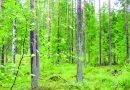Назначение леса
