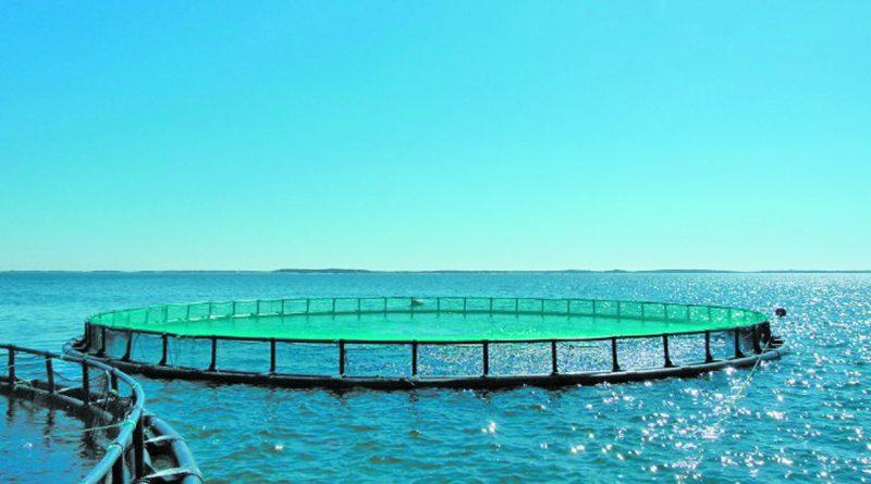 Рыбозаводы на экспорт
