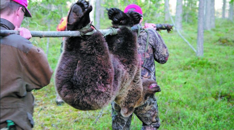 Охота на медведей в Финляндии