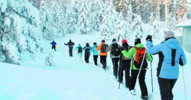 Скандинавская ходьба — источник здоровья